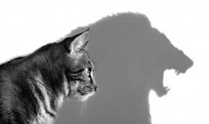 Κωνσταντίνος Καρόπουλος Ψυχοθεραπευτής-Αυτοπεποίθηση μεγάλο ζήτημα,Πως να ξεπεράσω την χαμηλή αυτοεκτίμηση